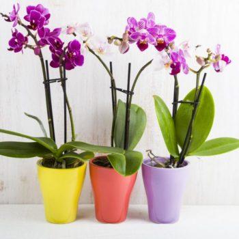 Пеоекись водорода и орхидея