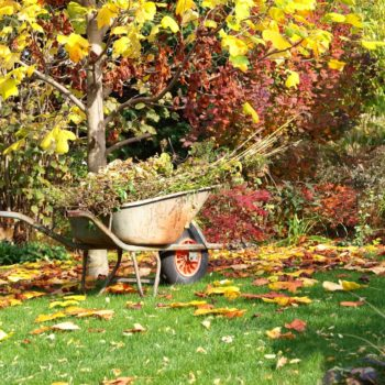 Садовые работы в ноябре: благоприятные дни по луне в 2020 году для посадки и ухода, необходимые в ноябре процедуры и их сроки