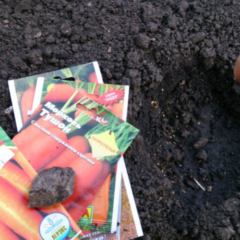 Выбор благоприятных дней для посева моркови в зиму